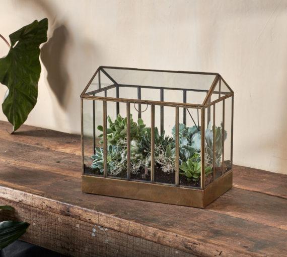 Planted terrarium, succulents, Kent